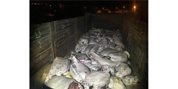 Van'da 11 Ton İnci Kefali Balığı Ele Geçirildi