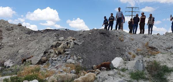 Konya'da, Arazide Bulunan 15 Köpek Ölüsüyle İlgili Suç Duyurusu