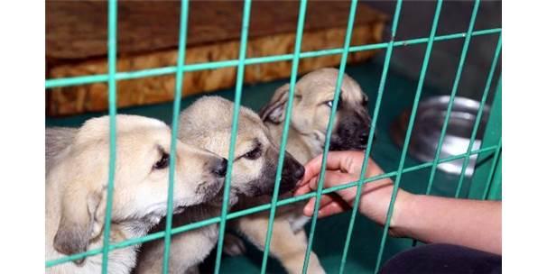 Çankaya Belediyesi, Terk Edilen Hayvanlara Sahip Çıkıyor