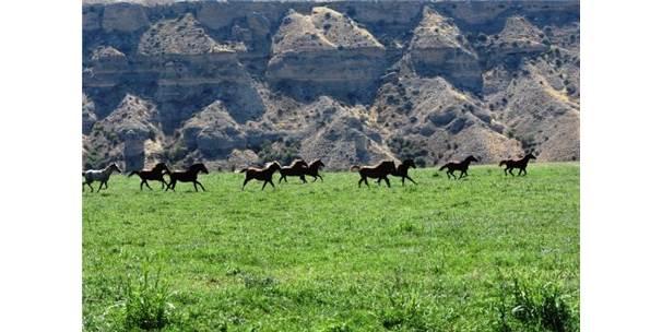 Şampiyon Atlar Sultansuyu'ndan Çıkıyor