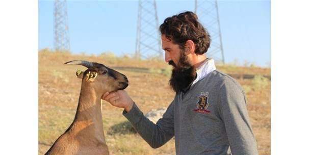 İşinden İstifa Edip, Çocukluk Aşkı Olan Hayvancılığa Başladı