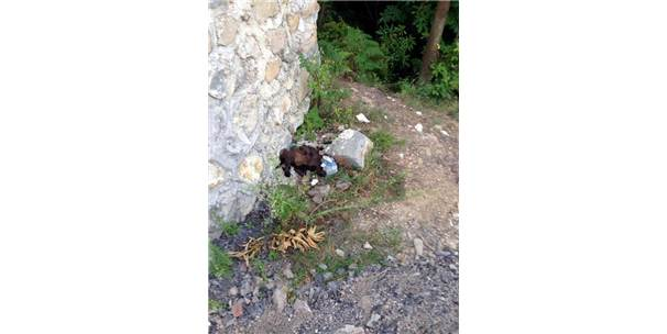 Zonguldak'ta Sokak Köpeğine İşkence İddiası