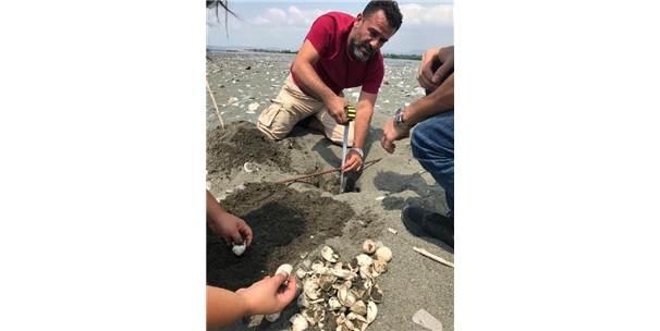 Hatay'da 60 Deniz Kaplumbağası Yavrusu Deniz İle Buluştu