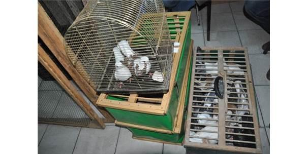 Tekirdağ'da Güvercinler Mezatta Buluştu