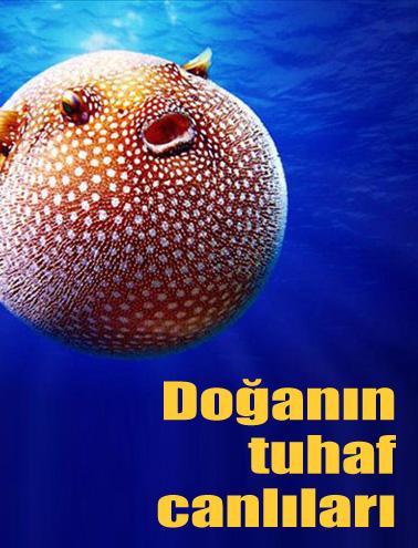 Okyanusun Derinliklerinde İlginç Canlılar