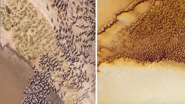Mars'ta hayvan sürüsü bulunduğu öne sürüldü