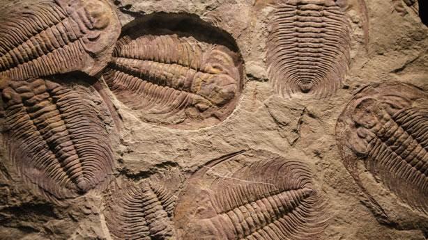 Bilimin açıklayamadığı 14 gizemli fosil