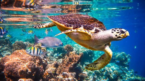 Okyanusların yalnızca yüzde 13'ü bakir kaldı