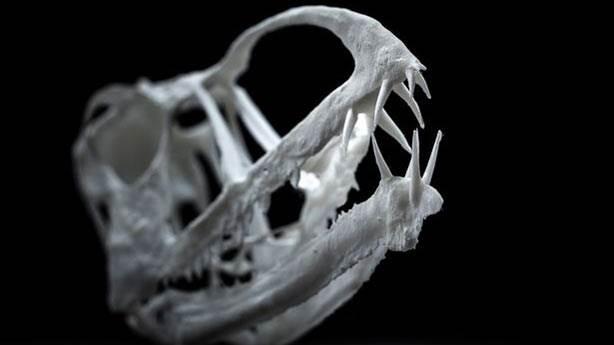 200 milyon yıllık uçan sürüngen iskeleti keşfedildi