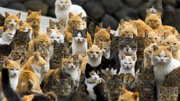 Avustralya'nın 2 milyon kediyi yok etme kararı vicdansızlık mı?