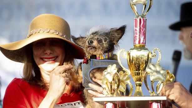 Dünyanın en çirkin köpeği seçilen 'Haylaz Serseri' hayatından memnun
