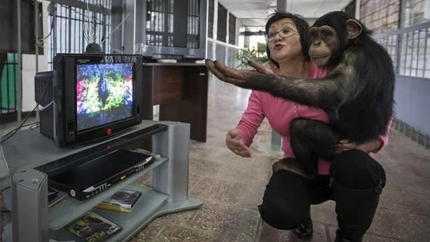 Şempanzeler video izleyerek bağ kurabiliyorsa doğru yoldayız demektir!