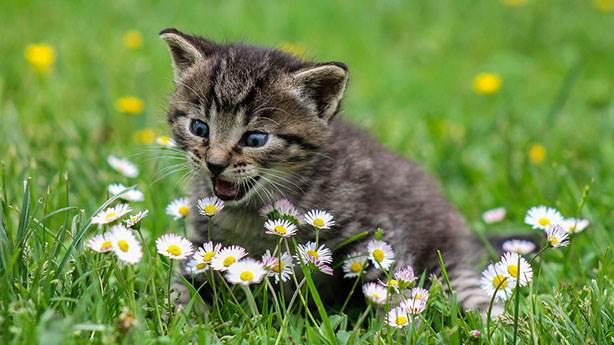Kedilerin yaptığı 9 garip hareket