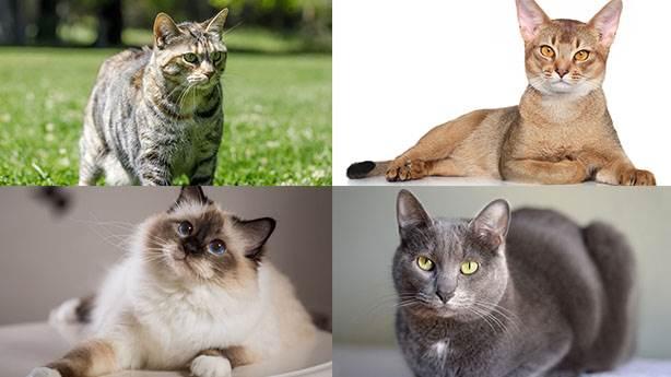Dünyanın en zeki 10 kedisi
