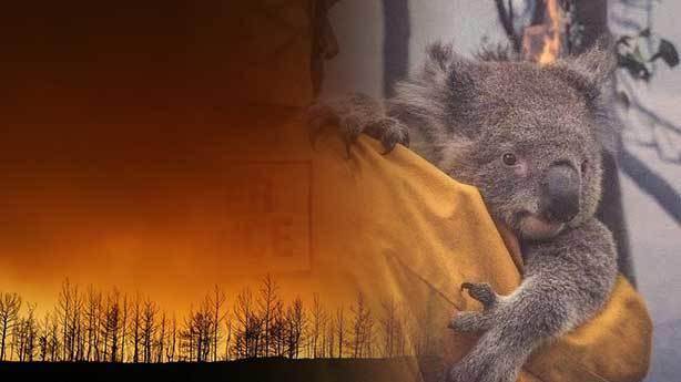 Orman yangını sırasında hayvanlar neler yaşıyor?