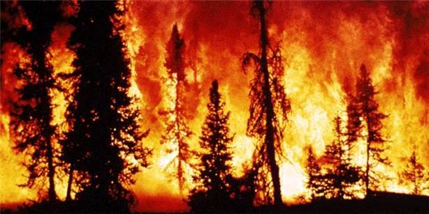 Doğa İçin: Orman yangınlarını önlemek için neler yapılabilir?