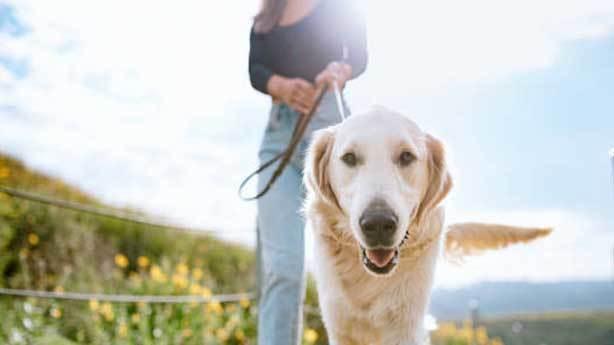 Köpekler insanların yalan söylediğini anlayabilir mi?