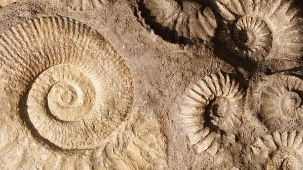 Bilimin açıklayamadığı fosiller