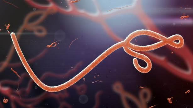 8. Ebola