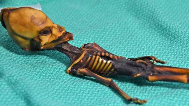14. Atacama Çölü'nde bulunan uzaylı iskeleti
