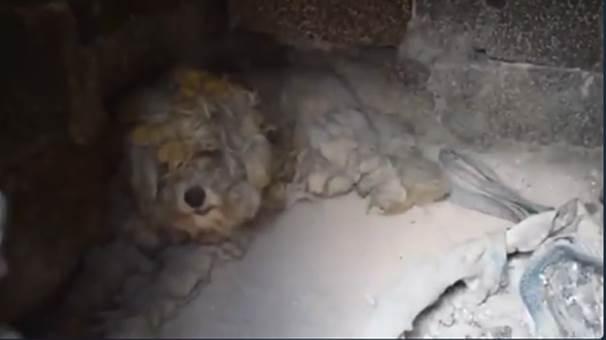 Mati'de kurtarılan köpek yavrusu
