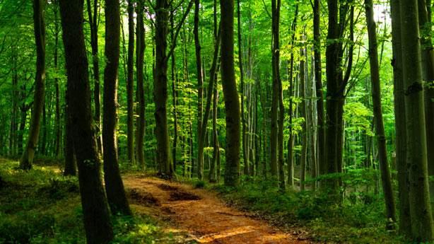 4. Belgrad Ormanı