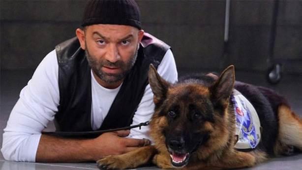 3- Köpekler evin içinde 24 saat tasma takmalı