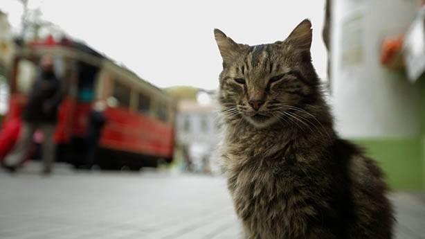 5. Kedi
