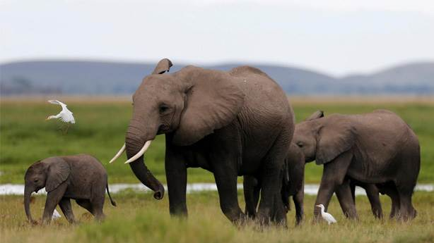9- Afrika filleri