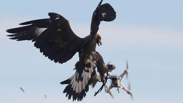 6- Avcı kuş