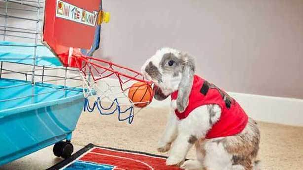 D&uuml;nyanın en kısa s&uuml;rede sma&ccedil; atan tavşanı<br /> &nbsp;