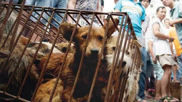 Milyonlarca kişi 'Save The Dog' dedi