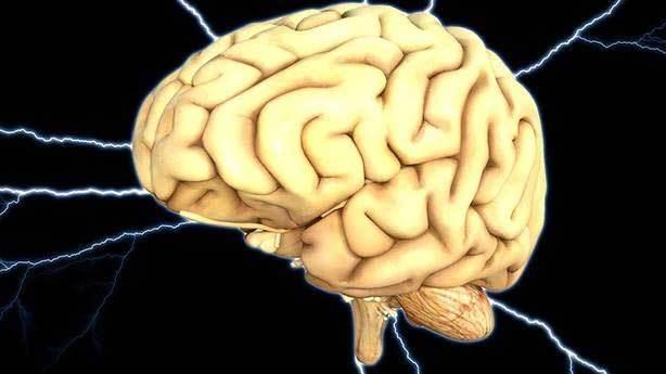 Küçülebilen tek beyin, insan beynidir