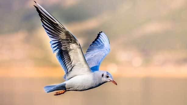 İlk kaçabilen kuşlar oluyor