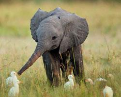 Şirinlikleriyle içinizi ısıtacak 10 tatlı yavru hayvan...