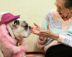 Psikolojik rahatsızlıkları terapist hayvanlar...