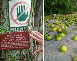 Bu bitkiye dokunmak yasak!