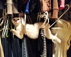 Sevimli kedilerin zor anları