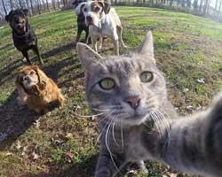 Köpeklerin efendisi (Selfie ustası kedi)
