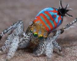 2015'te keşfedilen en garip 10 hayvan