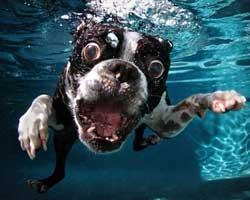 Köpeklerin su altındaki ilginç anları...