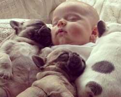 Köpeklerin sadıklığını kanıtlayan 10 kare