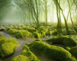 İçerisinde kaybolmak isteyeceğiniz 10 orman