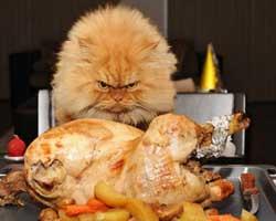 Kedilerden korkutan görüntüler