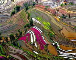 Kalkın gidiyoruz dedirten yerler: Tayland'daki pirinç tarlaları
