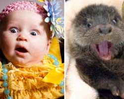 Hayvanların da çocuklar gibi olan sevimli halleri...