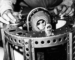 Uzayın ilk misafirleri olan 13 astronot hayvan
