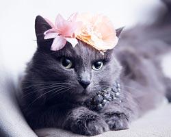 Dünyayı sallayan en karizmatik kedi!