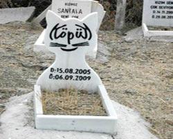 Türkiye'deki hayvan mezarlığından 13 duygusal fotoğraf
