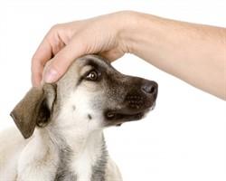 Köpeklerin kesinlikle nefret ettiği 10 şey